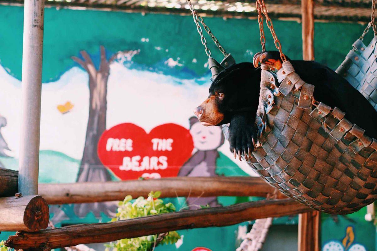 A black bear swings in a woven bed hanging from the ceiling.