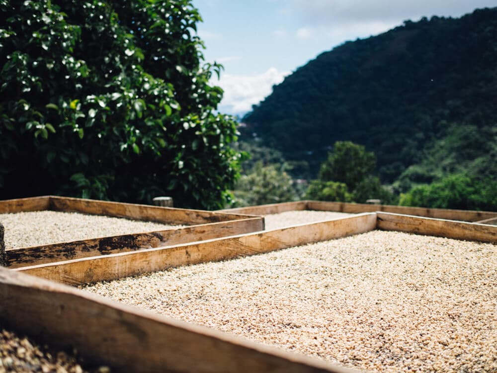 Our journey from Medellin to Jardin with LandVenture Travel was one of the highlights of our time in Colombia. Here's what a coffee tour Colombia entails.