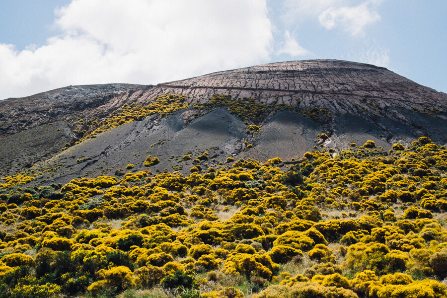 A black volcanic mountain in the Aeolian Islands covered with yellow flowers. Solfatare di Vulcano
